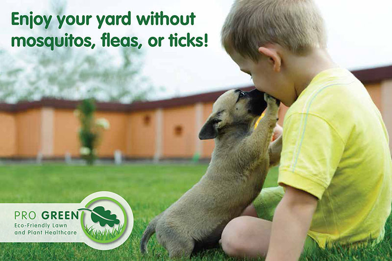 New Eco-Friendly Mosquito Flea & Tick Control